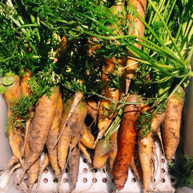 carrots - before beauty treatment